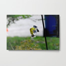 Finch Fight Metal Print