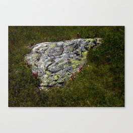 STONES LICHEN NUGGET Canvas Print