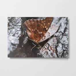Two Butterflies Metal Print
