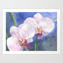 Orchid Gaze Art Print