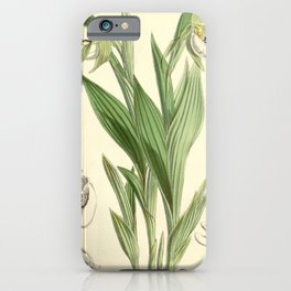Flower 5855 cypripedium candidum Small white Lady s Slipper or Moccasson Flower1 iPhone Case