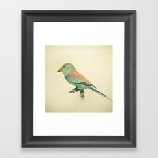 Bird Study #2 Framed Art Print