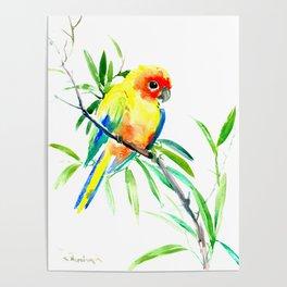 Sun Conure Parakeet, tropical yellow green bird decor Poster