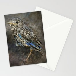 Fresh From The Nest Stationery Cards