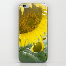 here comes the sun. iPhone & iPod Skin