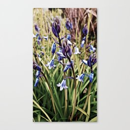 Bluebells, Magical Flowers Of Spells Canvas Print