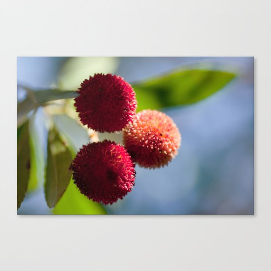 Strawberry tree fruits 8697 Canvas Print
