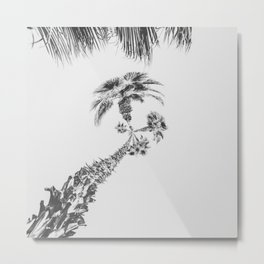 palm tree with clear sky background in black and white Metal Print