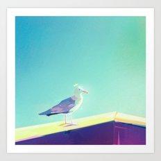Seagull in San Diego Art Print