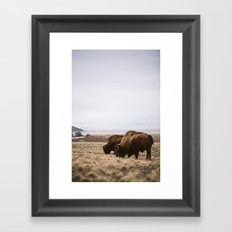 Bison Ridicule Framed Art Print