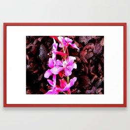 Flores de color rosa Framed Art Print