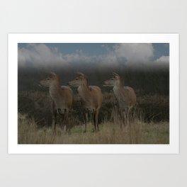 Three Red Deer Art Print