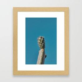 Cactus - NOA Argentina Framed Art Print