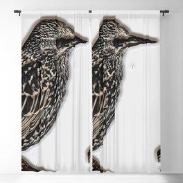 Norfolk sparrow Blackout Curtain