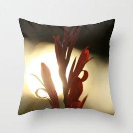 Canna in the Sun Throw Pillow