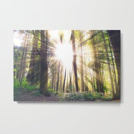 Sunshine in forest Metal Print