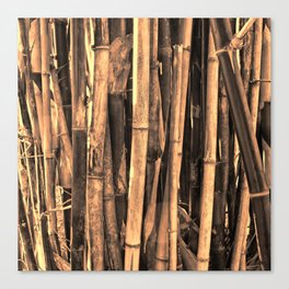 Bamboo in warm light Canvas Print