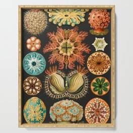 Ernst Haeckel Sea Squirts Illustration, 1904 Serving Tray