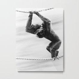 Siamang Monkey Metal Print