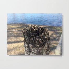 Tree Stump Lakeshore Abstract Metal Print