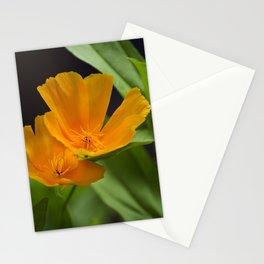 Orange Poppies Stationery Cards