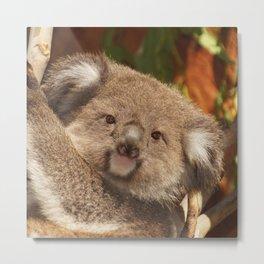 Koala20150304 Metal Print
