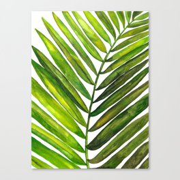 Tropical Collection Part III Canvas Print