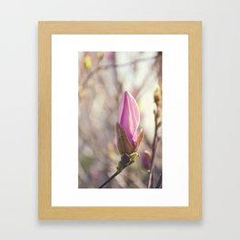 AFE Pink Magnolia Framed Art Print