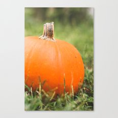 bright little pumpkin Canvas Print