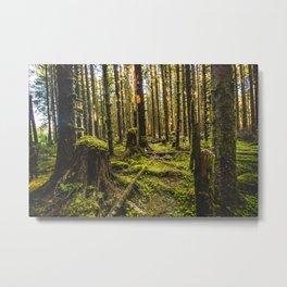 Hoh Moss Stump Metal Print
