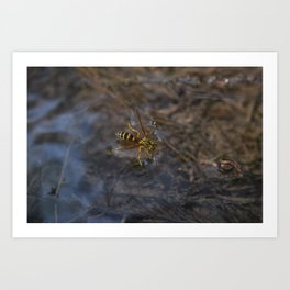 wasp over water Art Print