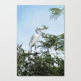 Cattle Egret In a Tree Canvas Print
