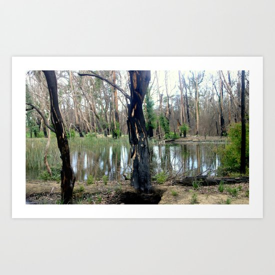 Reflecting after a bush Fire Art Print