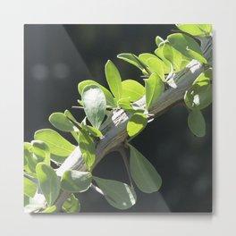 Fine Art Macro Photo of Elegant Ocotillo Branch Metal Print