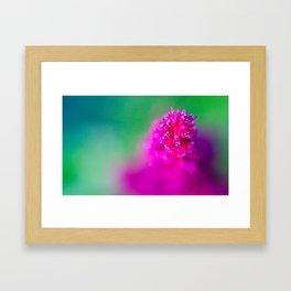 Pink resurgence Framed Art Print