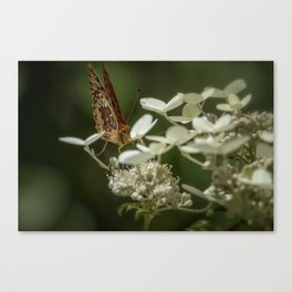 Butterfly on a Hydrangea Canvas Print