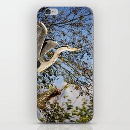 Grey Heron taking flight iPhone Skin