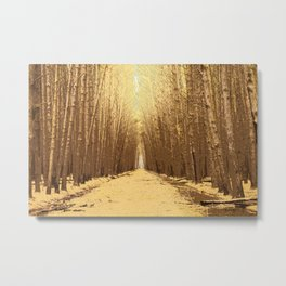 The road in a barren forest Metal Print