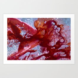 Halfmoon Betta | Abstract Photography Art Print