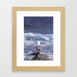 yellow-legged gull Framed Art Print