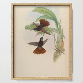 Vintage Print - A Monograph of the Hummingbirds (1849) - Coppery-Tail Serving Tray