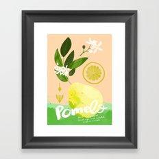 Botanical Diagram: Pomelo Framed Art Print