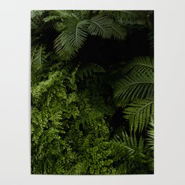 Tropical jungle. Poster