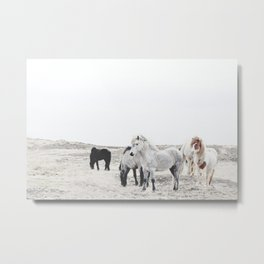 WILD AND FREE  1 - HORSES OF ICELAND Metal Print