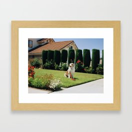 Biggs on Lawn Framed Art Print