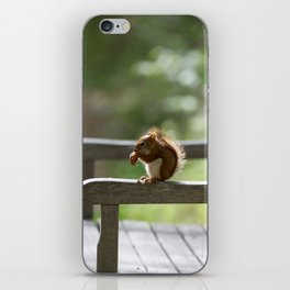 Red Squirrel Snack Time iPhone Skin