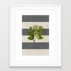 botanical stripes 5 -gray Framed Art Print