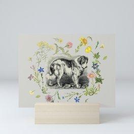 Saint Bernard Dog & Alpine Wildflowers - Gray  Mini Art Print