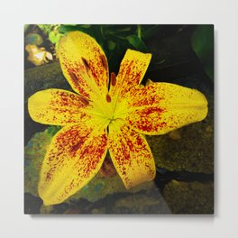 Yellow Imperial Lily Metal Print