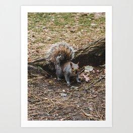 Cute fluffy grey squirrel on an autumn day Art Print